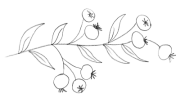 Branch-13
