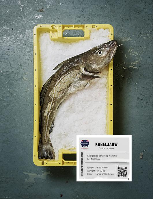 Kabeljauw Noordzeevis